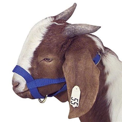 Poly Goat Halter - Choose your color and size NEW | eBay