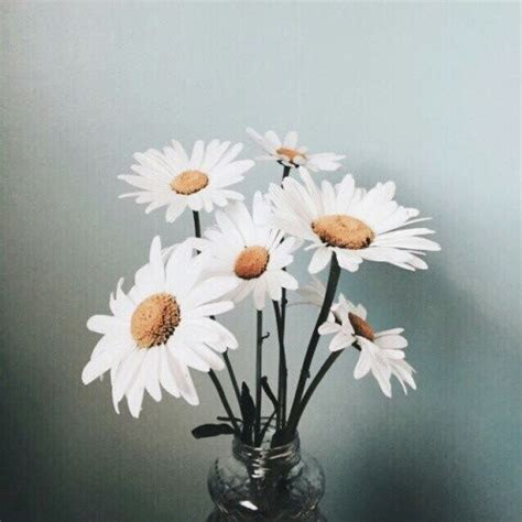 Vintage Daisies Pictures, Photos, and Images for Facebook