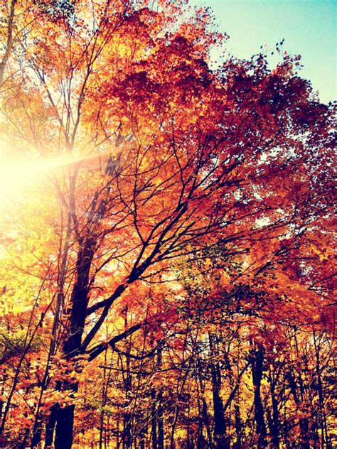 A Taste Of Autumn Pictures, Photos, and Images for